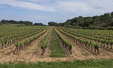 Línia de crèdits AgroInnpulso per pimes, en el marc del Pla de Recuperació espanyol i finançats pel NGEU